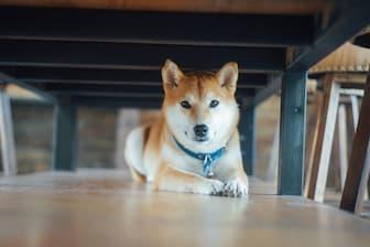 Inspired Japanese Anime Dog Names