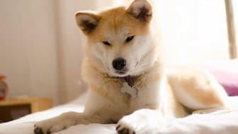 Japanese Dog Names Female