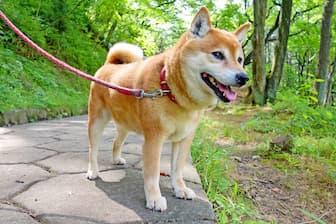 Japanese Names for Girl Dog