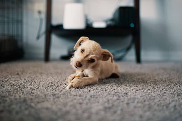 Little Adorable dog names