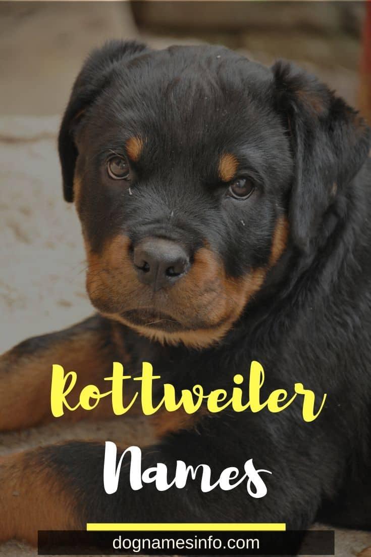 Male Female Rottweiler Names