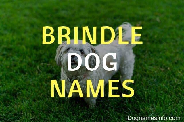 Unique Brindle Dog Names