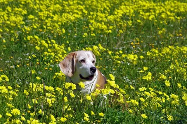 animal-bloom-blossom-cute