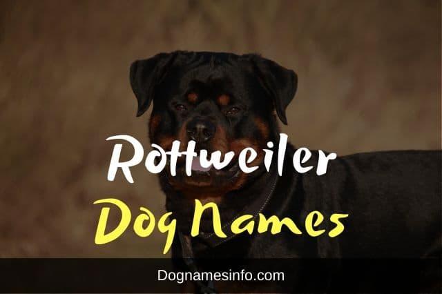 rottweiler dog names