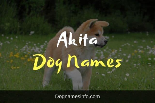 Akita Dog Names