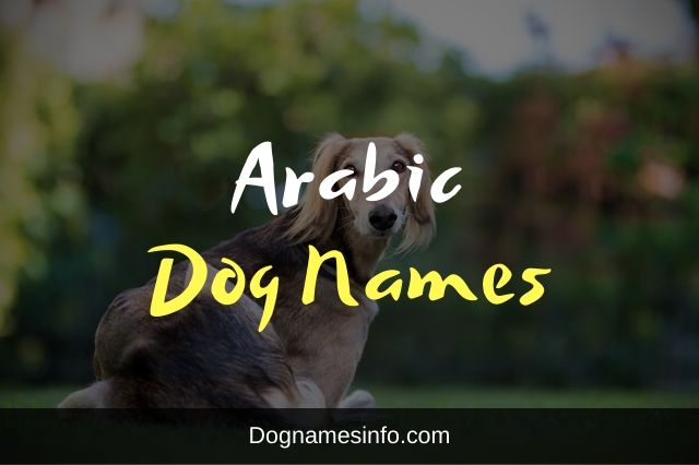 Arabic Dog Names