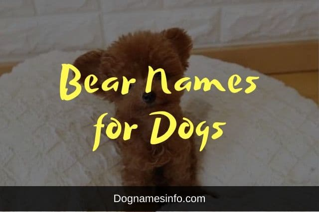 Bear Names for Dogs