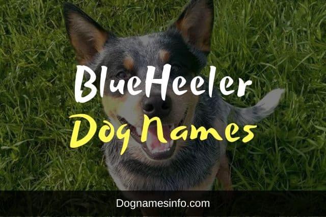 Blue Heeler Names