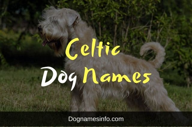 Celtic Dog Names