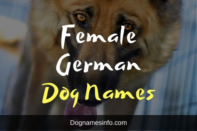 Female German Dog Names