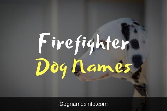 Firefighter Dog Names
