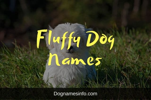 Fluffy Dog Names