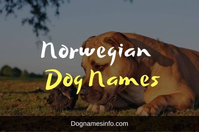 Norwegian dog names