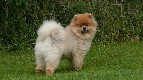 fluffy-dog-names-2