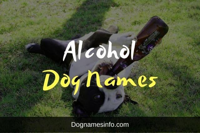 Alcohol Dog Names