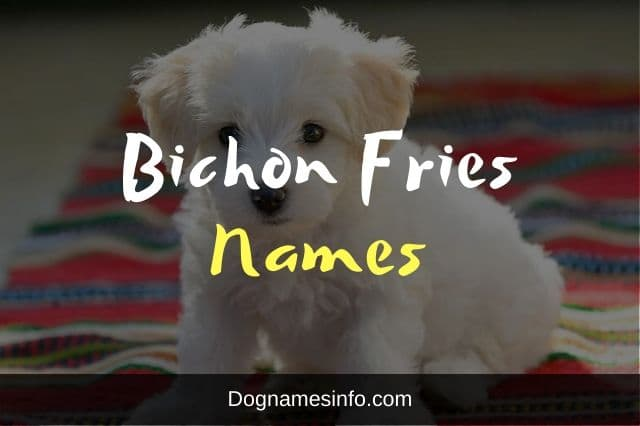 Bichon Fries Names for Dogs