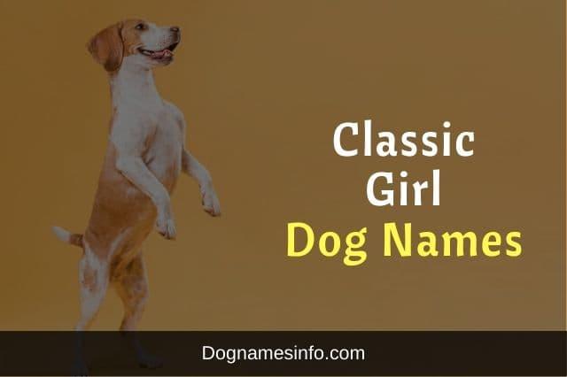 Calssic Girl Dog Names