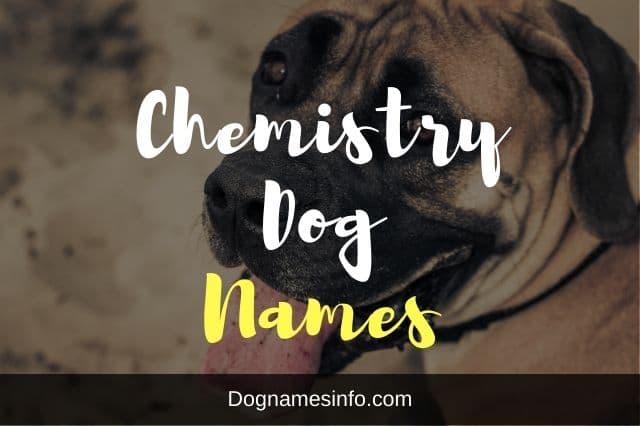 Chemistry Dog Names
