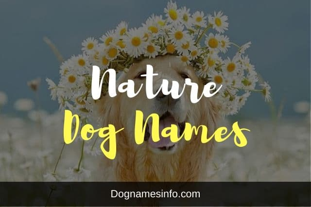 Nature Dog Names