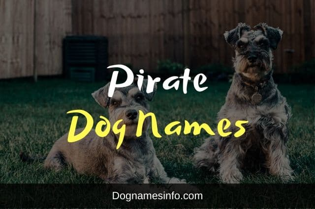 Pirate Dog Names