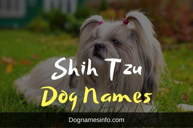 Shih Tzu Names