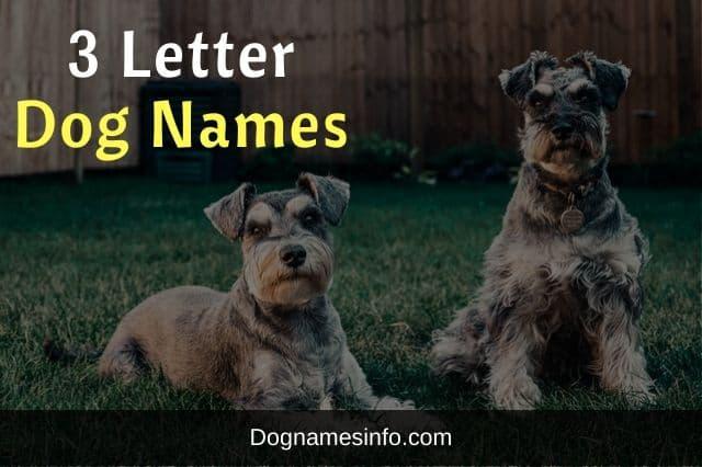 Three Letter Dog Names
