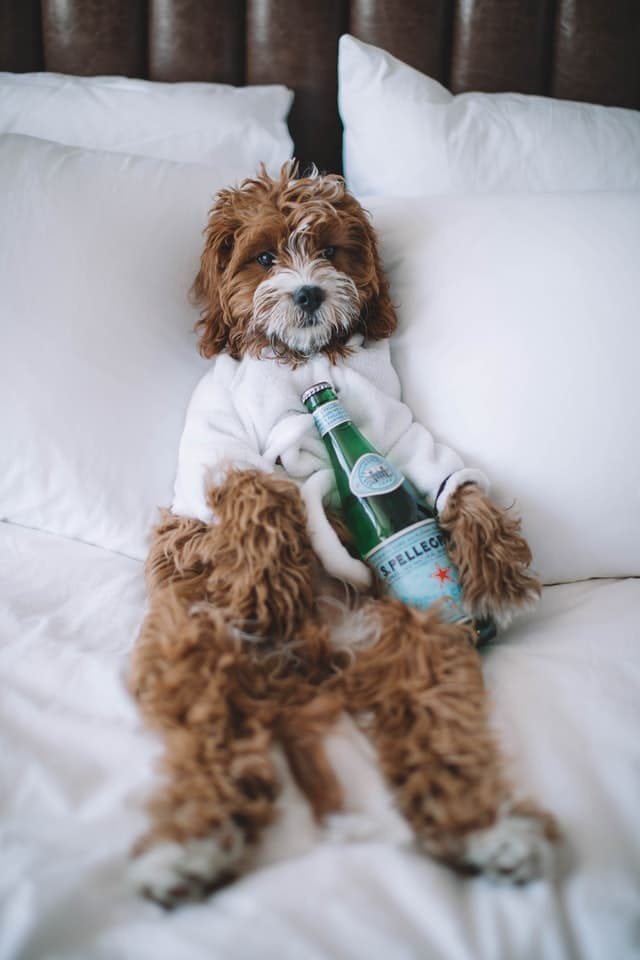 Whiskey Names for Dogs