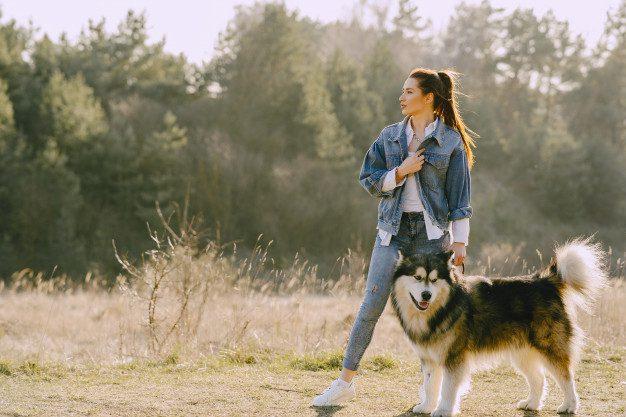 stylish-girl-sunny-field-with-dog
