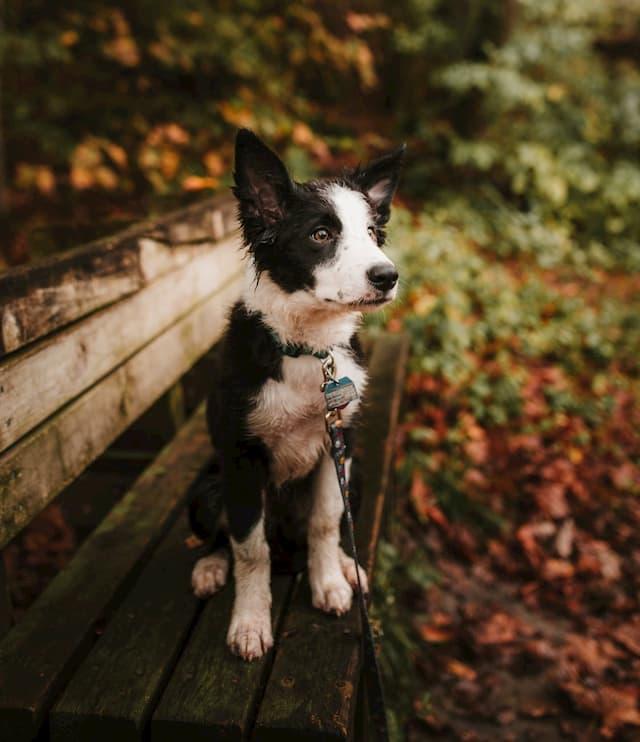 Cajun Male Puppy Names
