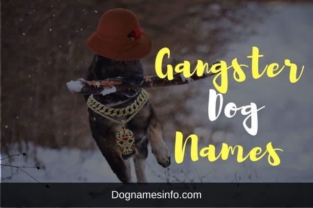 Gangster Dog Names