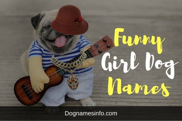 Funny Girl Dog Names
