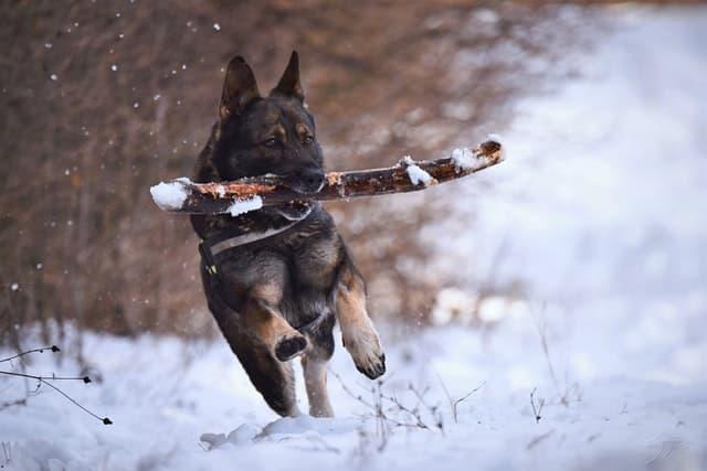 Military German Shepherd Names