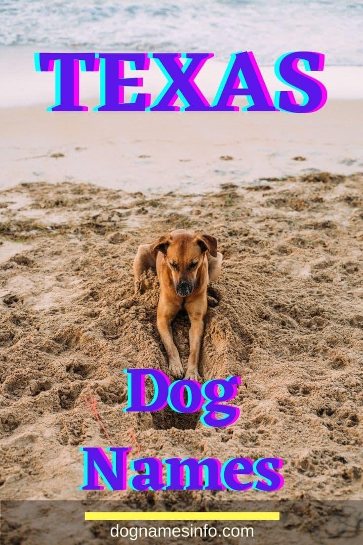 Texas Dog Names