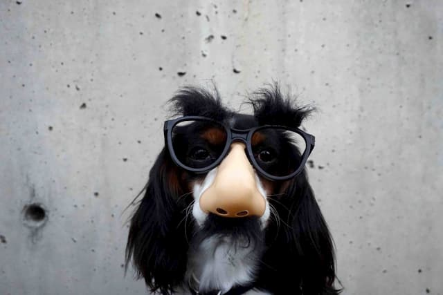 funny-dog-with-glasses-mustache_pxfuel-copy-1536x1024