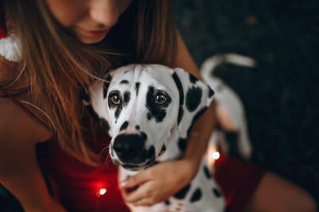 Unique Names for Clever Dalmatian Puppies