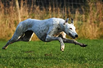 Clever Greyhound Names