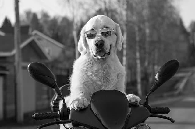Hipster Girl Dog Names