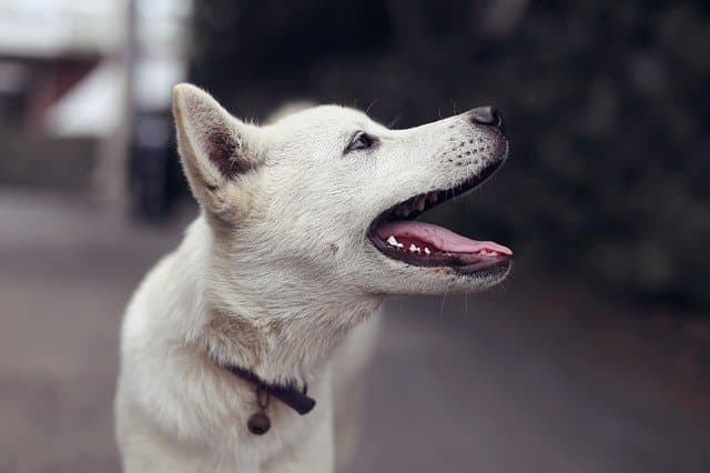 Female Dog Names That Start With A