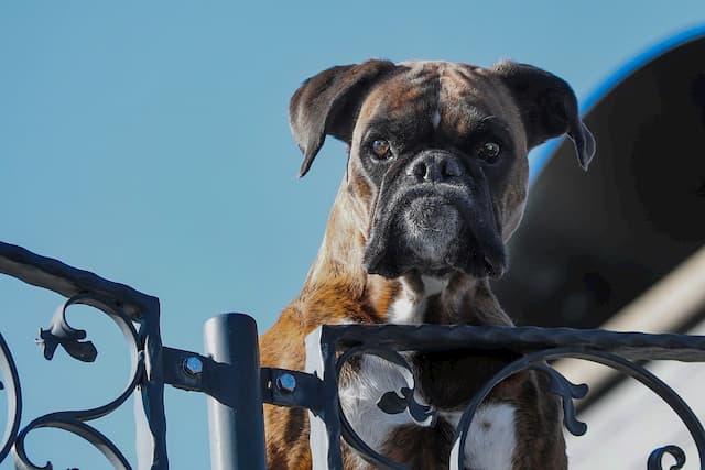 Badass Guard Dog Names