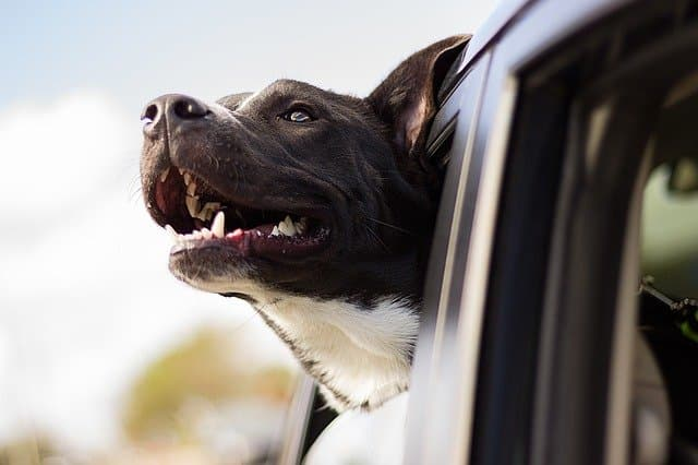 Car Dog Names