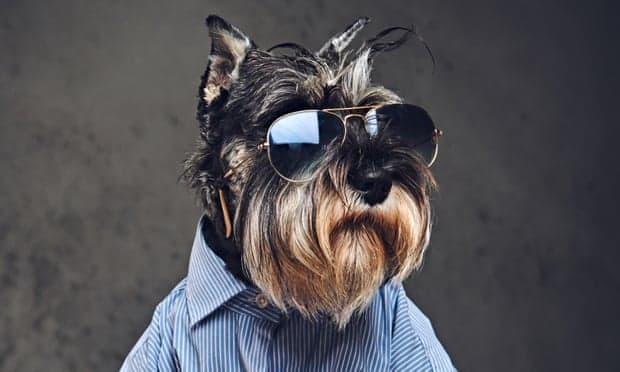 Designer Dog Names