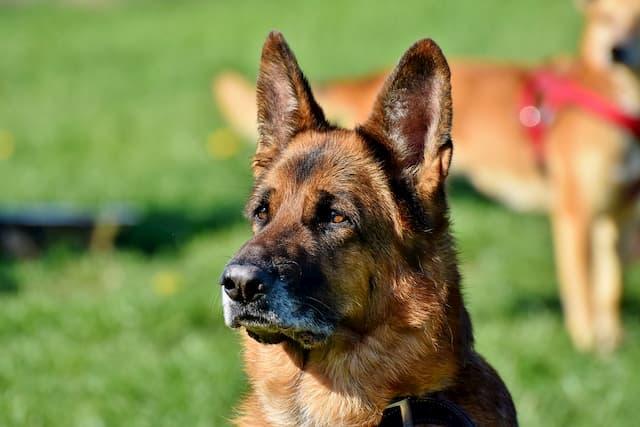 Female Guard Dog Names
