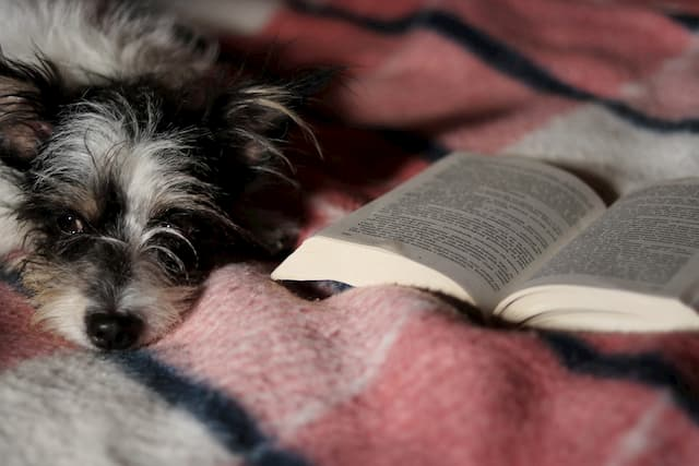 Dog Names from Literary Characters