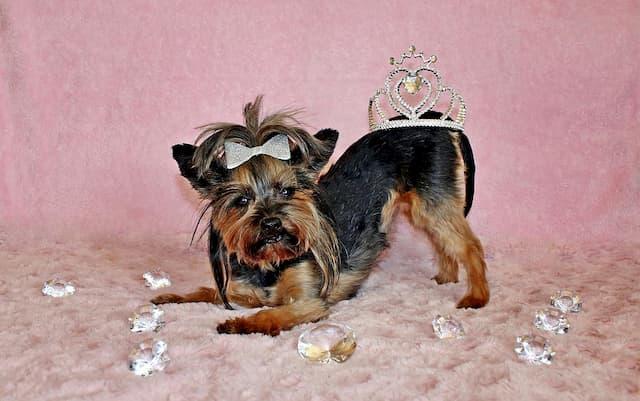 Elegant Girl Dog Names