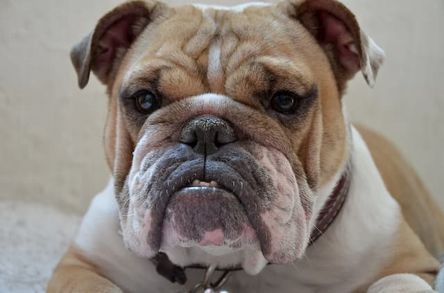 Fat Dog Names