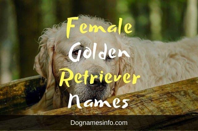 Female Golden Retriever Names
