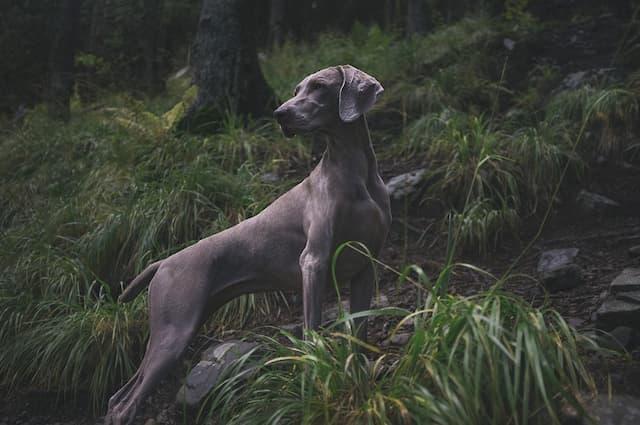 Male Hunting Dog Names