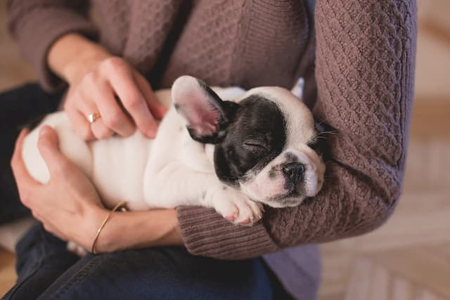 Small Dog Names That Start With A