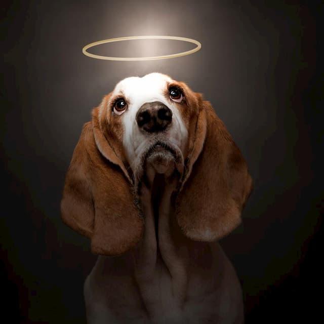 Spiritual Dog Names