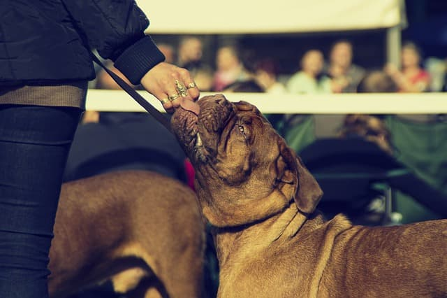 Celebrity French Bulldog Names